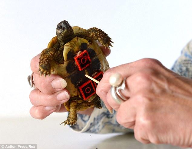 tortoise-3