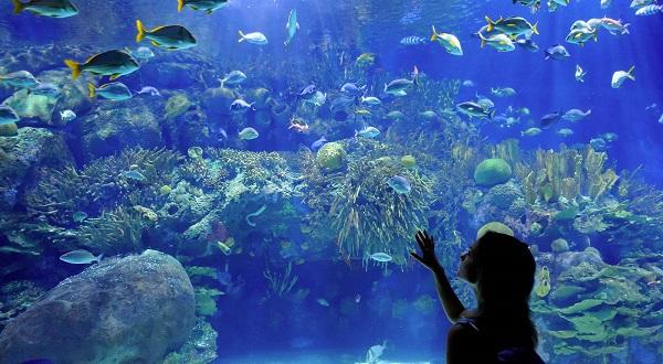 Aquarium Sweepstakes