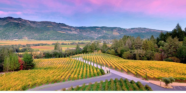 Escape To Napa Valley Trip Sweepstakes