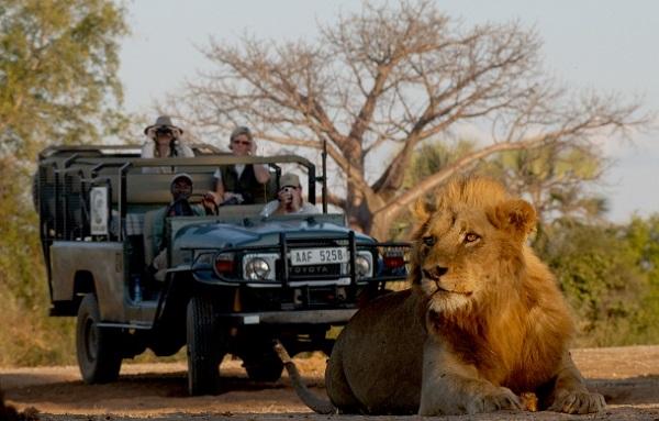Luxury Safari Holiday Sweepstakes