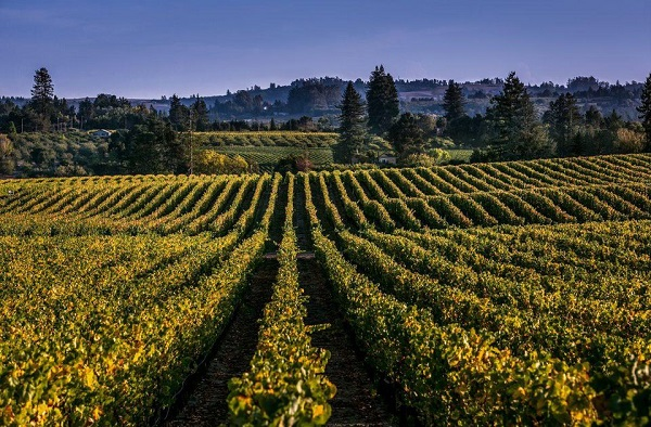 Russian River Valley Trip Sweepstakes