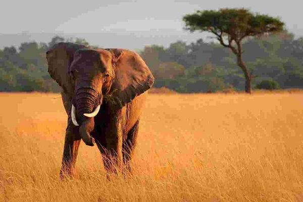 Safari for 2 in Kenya Sweepstakes