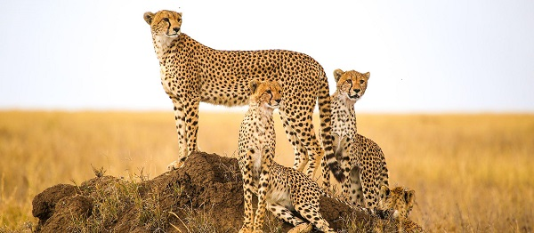 Serengeti $20,000 Safari Sweepstakes