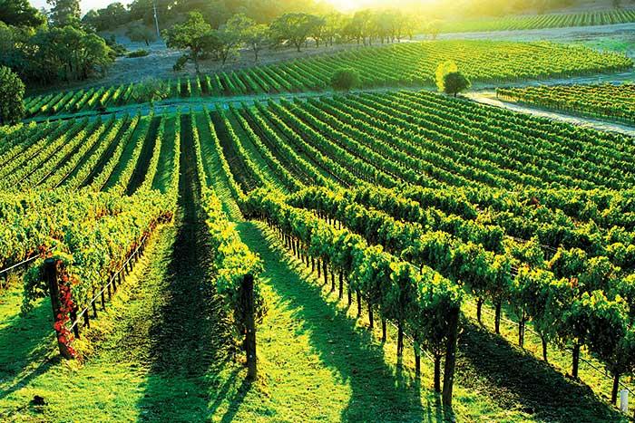 Trip to Napa Wine Country Sweepstakes
