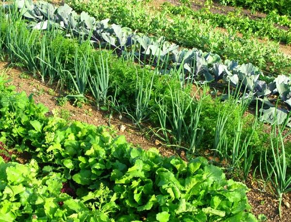 Free Sample of BioCat Solutions More Fertilizer
